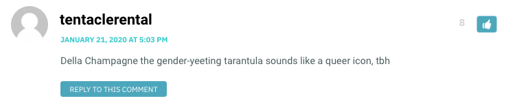 Della Champagne the gender-yeeting tarantula sounds like a queer icon, tbh
