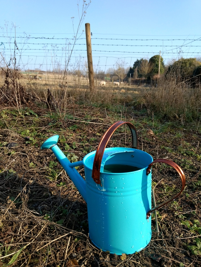 a watering can in an allotment