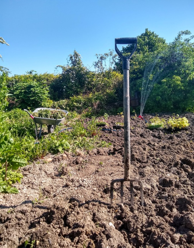 A fork in soil with a wheelbarrow and sprinkler in background
