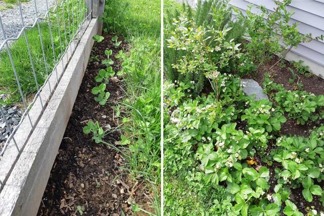 casey's plants