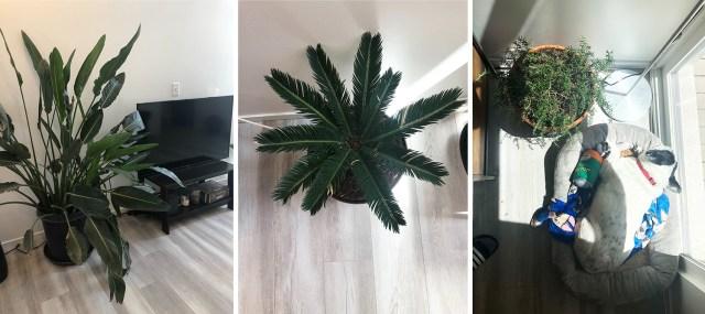 three of kayla's plants