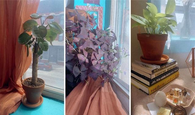 three of shelli's plants