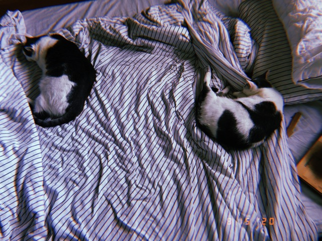 Two cats, Alexei and Anya, curl up into little balls next to each other on a bed. The bed has black and white stripped sheets and the image has a filter on it make it look like a Polaroid from the 1990s.