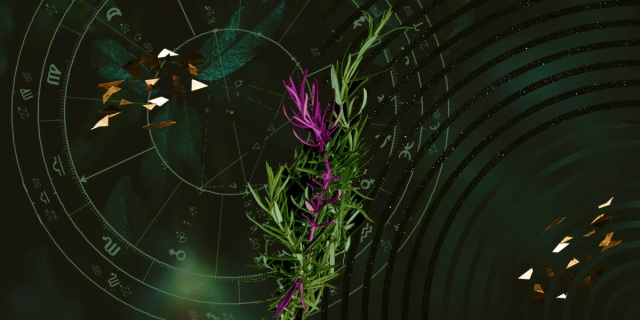 A multimedia collage, rosemary is central in this image because it's the representation of hope (adopting ancestral practices), and inc. the magenta to highlight some of the stalks of rosemary.