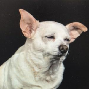 Profile picture of Kala