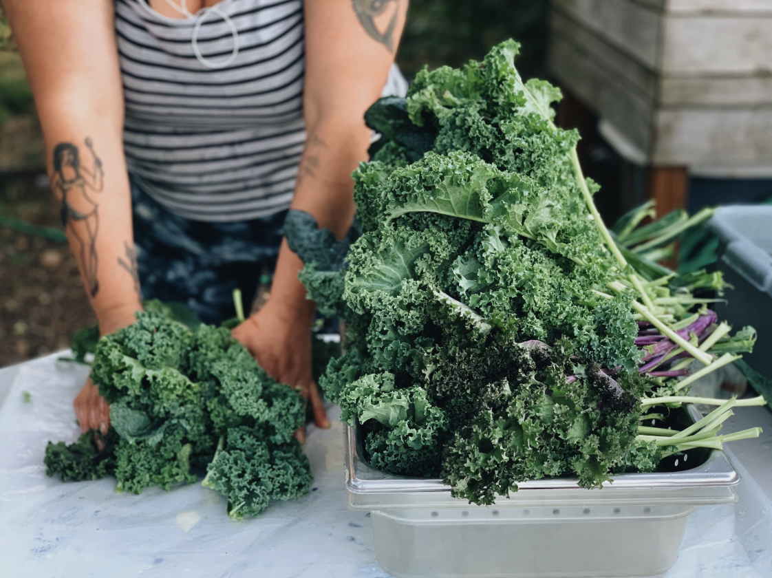a white woman stands behind a table harvesting a huge pile of green kale