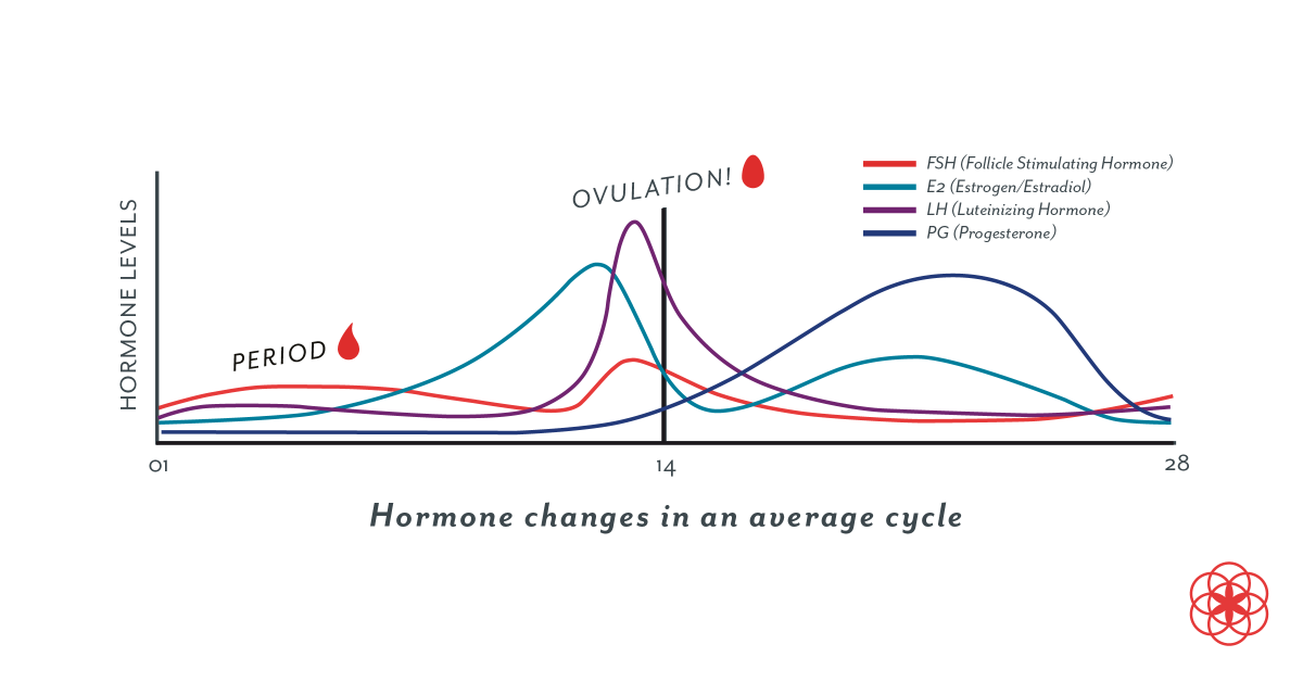"""A graph called """"Hormone Changes in the Average Cycle"""" shows the rise and fall of FSH, estrogen, LH and progesterone"""