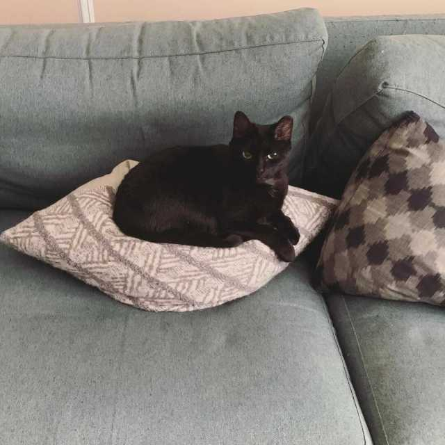 A small black cat curled up on a throw pillow