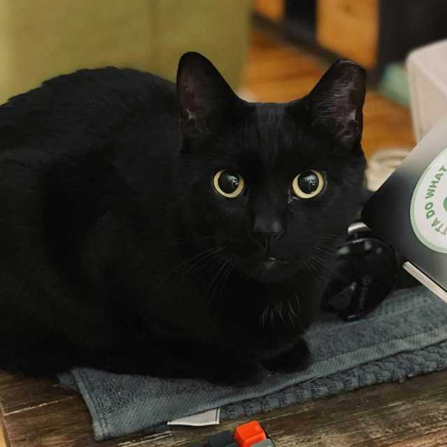 A small all-black cat with large yellow eyes staring at the camera