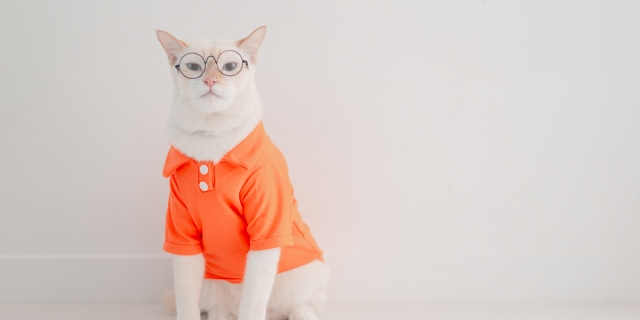 A photo of a white short-haired cat wearing a neon orange polo shirt and eyeglasses, looking judgy