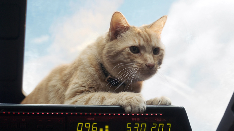 Goose lies on the dashboard of Carol Danvers' space plane