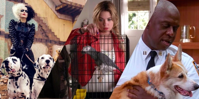 Three photo collage: Cruella with some Dalmations on a leash, Hanna Marin with a Parrot, and Captain Holt with his dog Cheddar