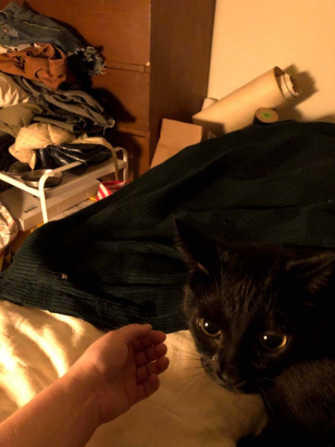 A photo taken from Rachel's perspective while sitting up in her bed, showing that beyond the borders of the bed is a pile of clothes, furniture and posters; the cat is visible on her lap