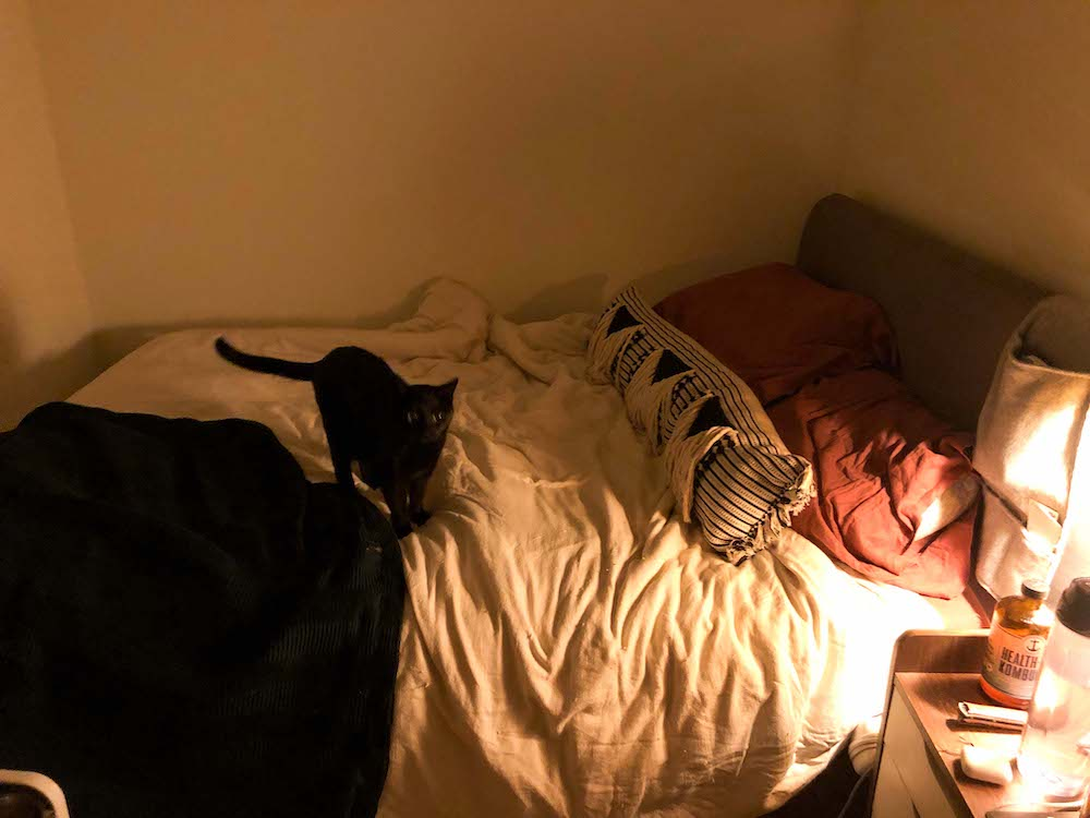 A dimly lit photo of Rachel's bed, in a small bedroom with bare walls, featuring a white comforter, red pillows and a black & white decorative pillow over a gray headboard, with a small black cat standing as if lost in thought in the center