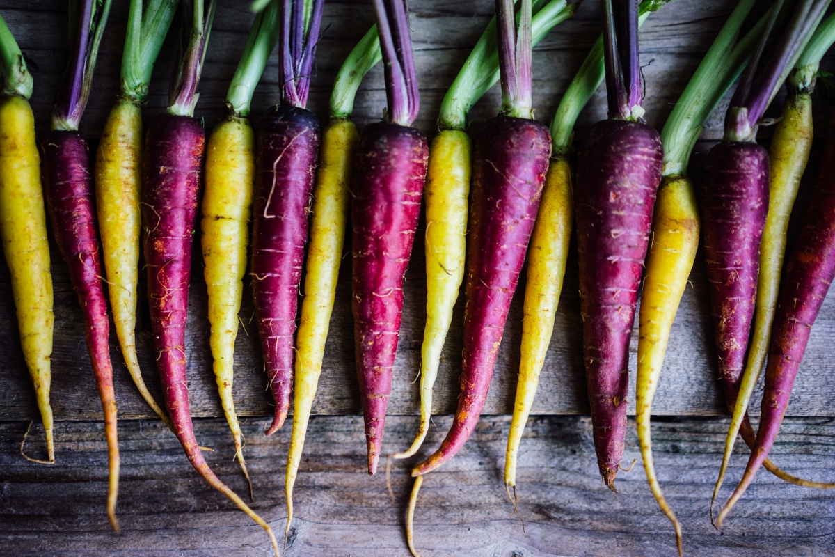 a line of alternating yellow and purple carrots