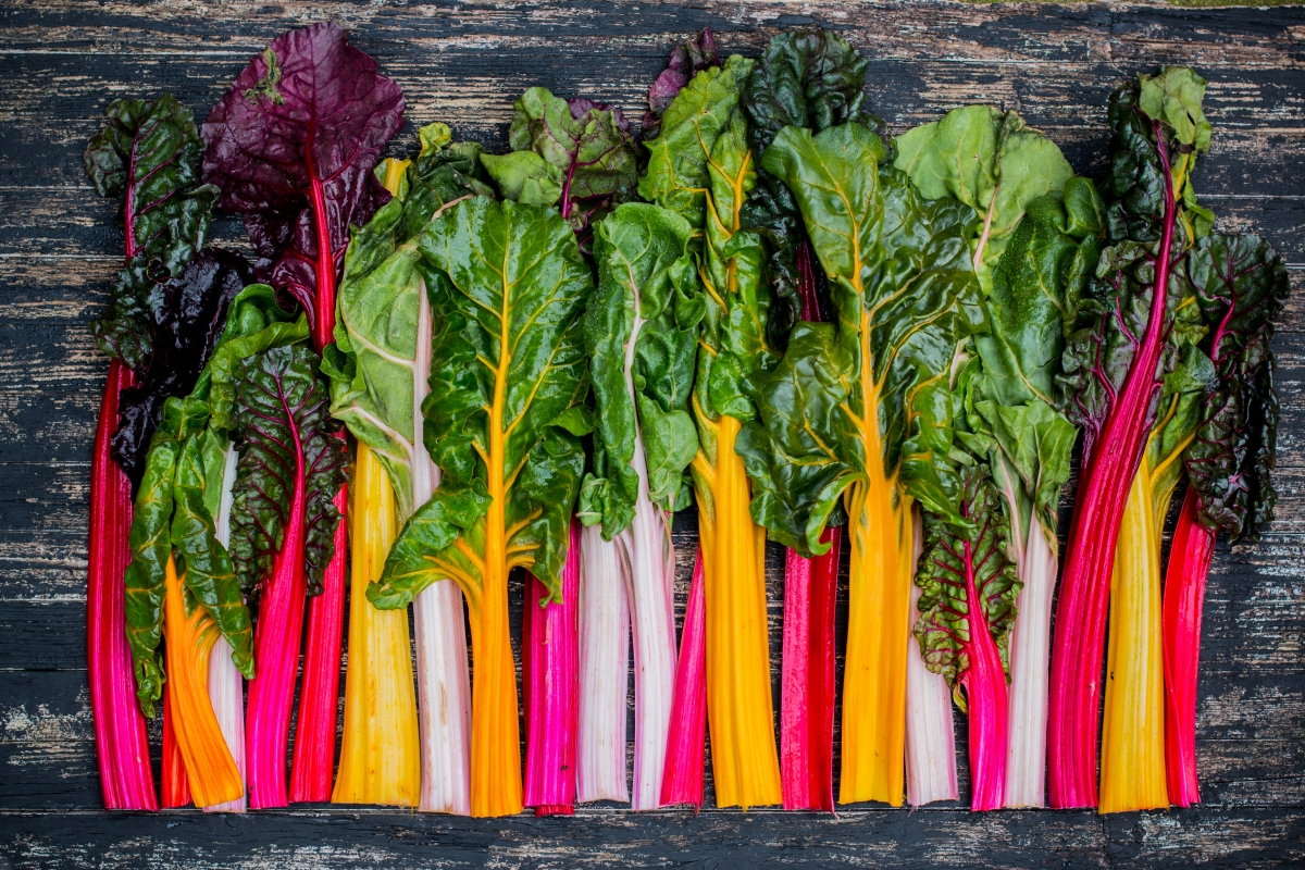a photo of many colors of swiss chard all lined up so cutely