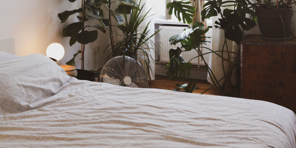 Image shows a white bedroom, with a beautiful made bed and the room is filled with plants.