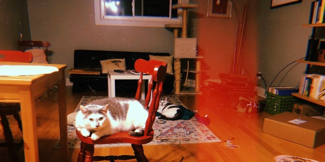 portrait of a home scene featuring two cats