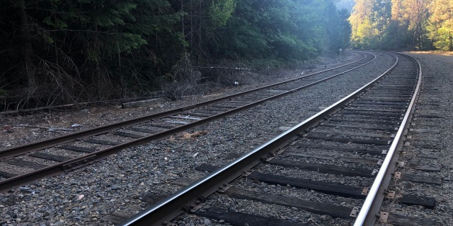 railroad tracks trailing off into the distance, with beautiful tall green trees on either side
