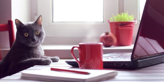 a cat sits at a desk with a laptop and a steaming cup of coffee, looking perplexed