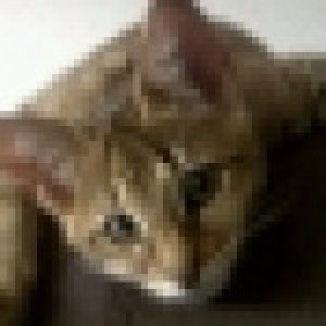 Profile picture of Asato