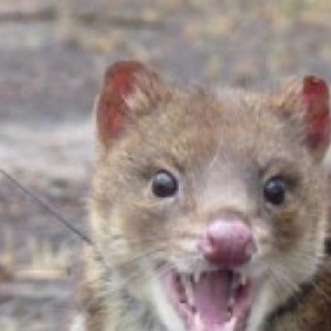 Profile picture of Quoll