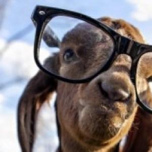 Profile picture of Alex Goat
