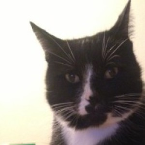 Profile picture of LemonBadger