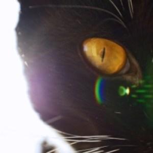 Profile picture of Gatito