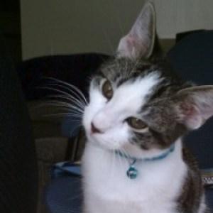 Profile picture of Daze