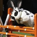 Profile gravatar of Bunny Steeplechase
