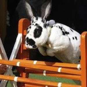 Profile picture of Bunny Steeplechase