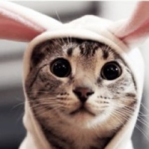 Profile picture of ExceptForBunnies