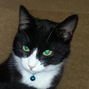 Profile photo of Artemis