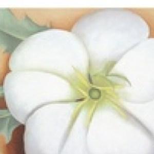 Profile picture of Primrose