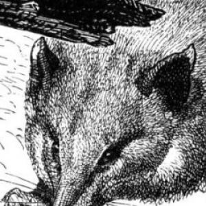 Profile picture of Ameridelphia