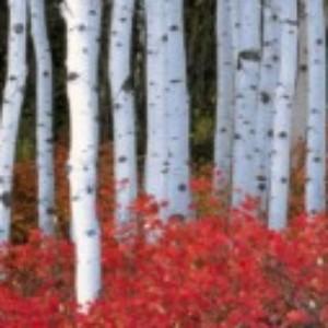 Profile gravatar of birch