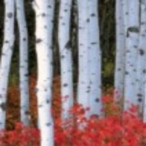 Profile picture of birch