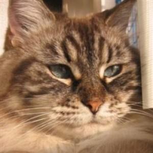 Profile picture of KimberKatie
