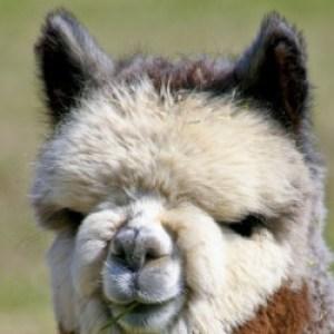 Profile picture of madmorris
